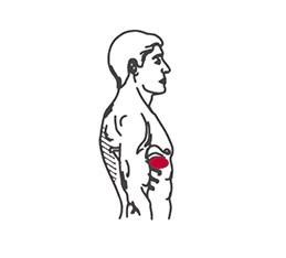 smärta_bröstkorgsmuskulatur